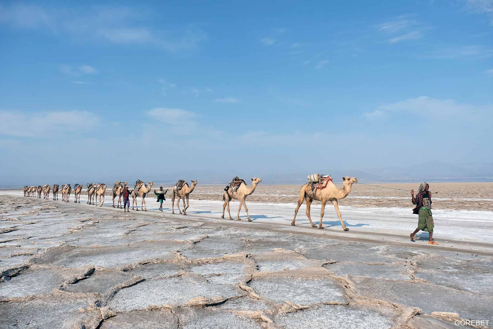 Afar Ethiopia 101: A full on the road guide to visiting Afar region