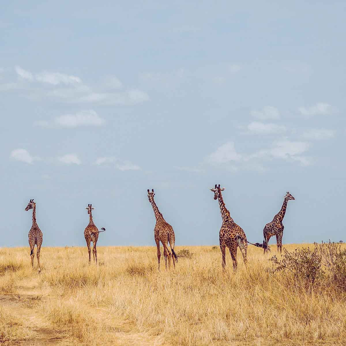 15 Ethiopia National Parks