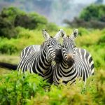 A Basic Guide to the Top 10 Animals in Africa Safari